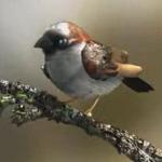 sparrow_thumb